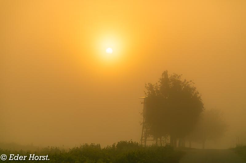 Im Nebel die Bilder werden sehr mystisch