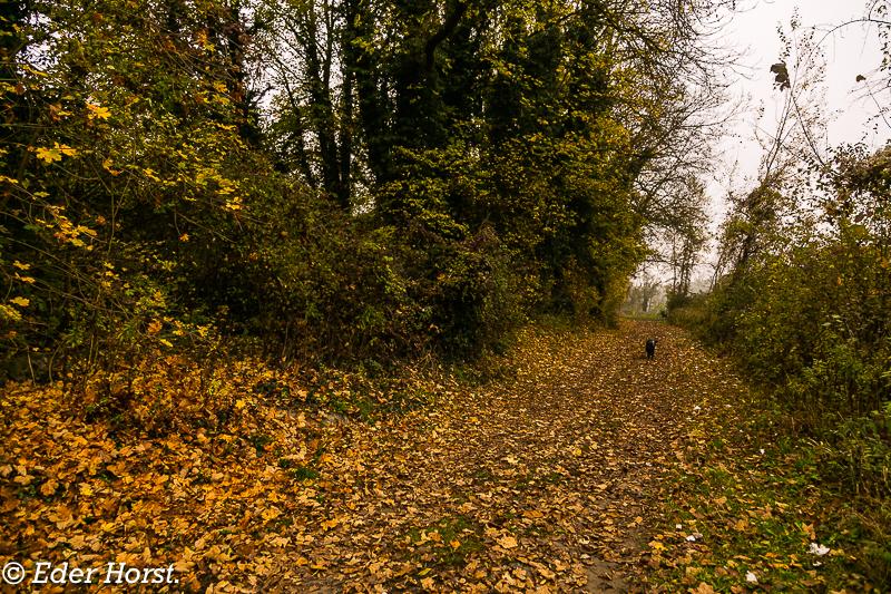 Wandern entlang der Donau bei Wilhering im Herbst.