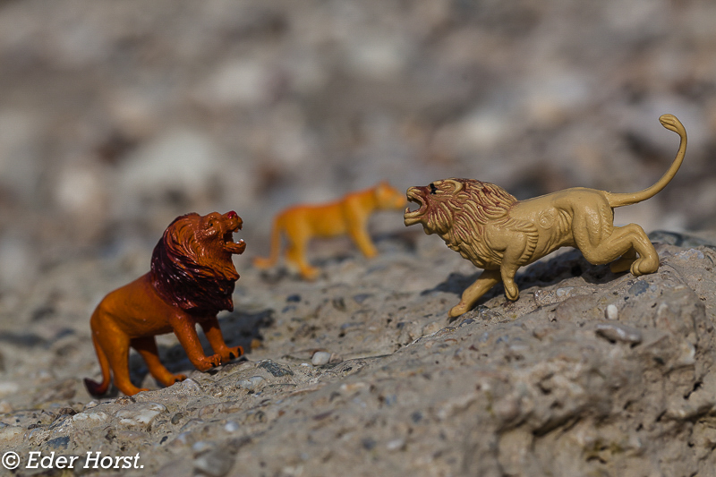 Meine erste Safari in der Steinwüste…