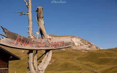 Bergwandern im Naturpark Sennes…Süd Tirol
