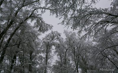 Kürnbergerwald…Donau – Au im Winter….